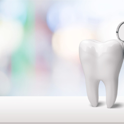 What's the difference between a DDS and a DMD?